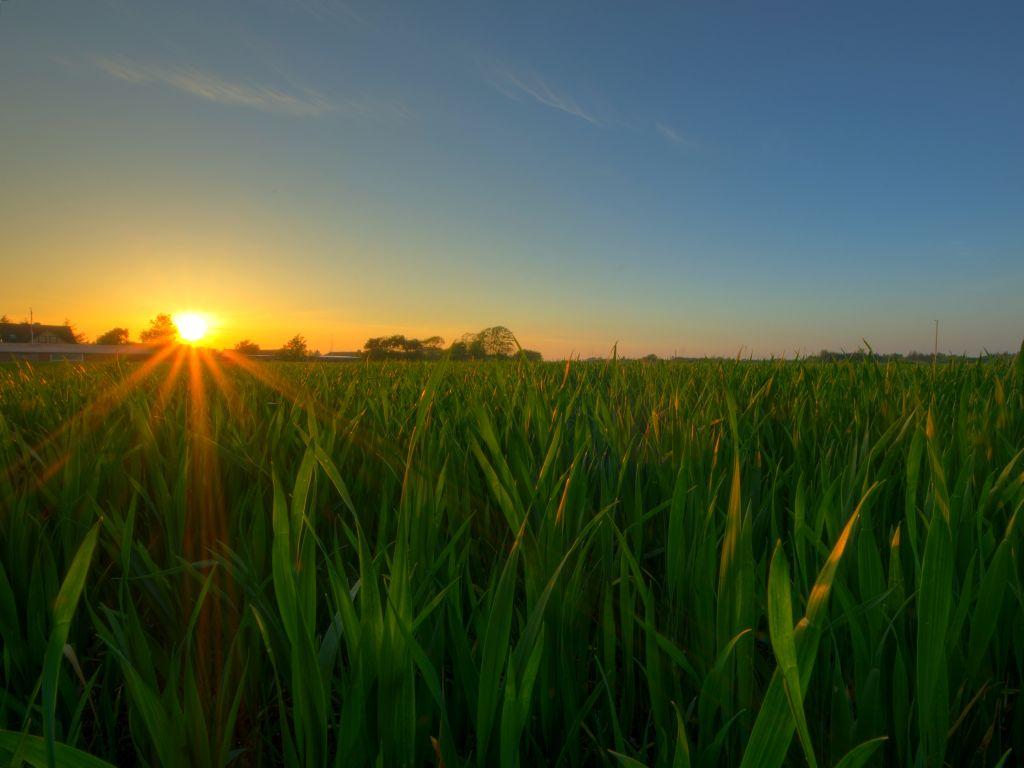 Sonnenaufgang über Weizenfeld